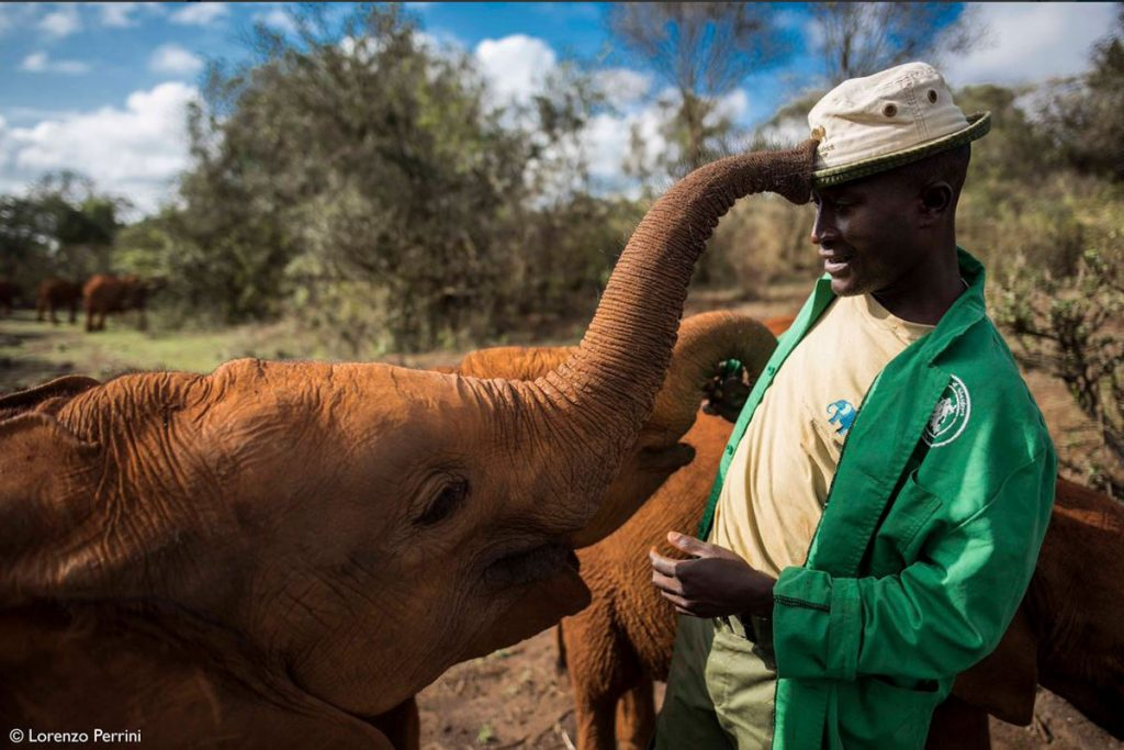 Elephant Nglai touching her keepers hat at David Sheldrick Elephant Orphanage