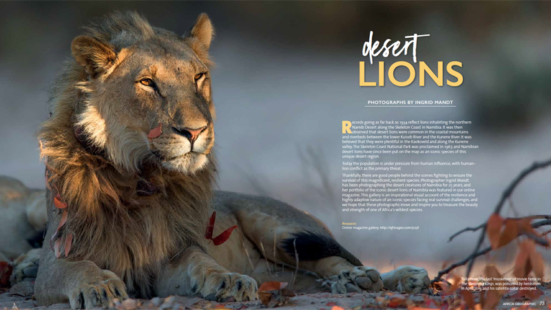 Africa Geographic Yearbook Desert Lion