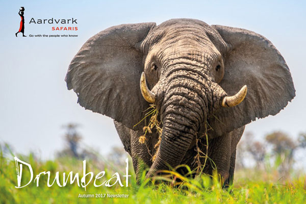 Drumbeat Magazine Autumn 2017 front cover elephant