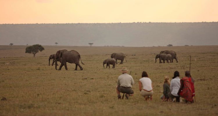 Elephants in Kenya -guests on a walking safari at Elephant Pepper Camp, Masai Mara