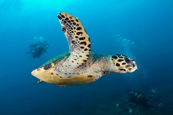 beaches with adventure diving with hawskbill turtles at Rocktail Beach