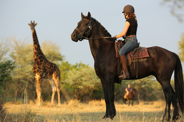 Riding with giraffe at Ant's Nest, South Africa
