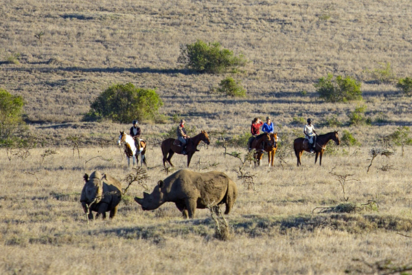 Group riding with rhinos at Borana