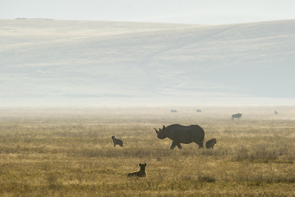 Wildlife hotspot at Entamanu Ngorongoro