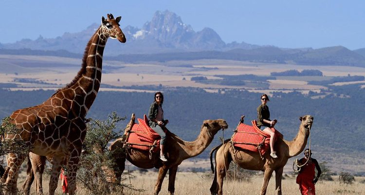 family riding safaris - riding camels in Lewa, Kenya