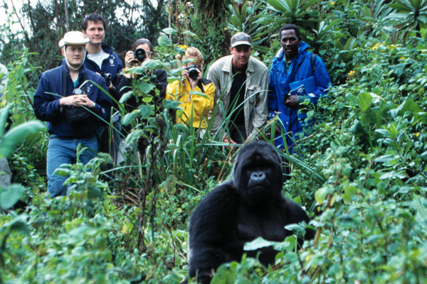 Gorilla trekking group with trackers in Rwanda, Volcanoes Safaris