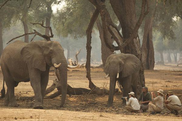 Goliath Safaris, Mana Pools, Zimbabwe