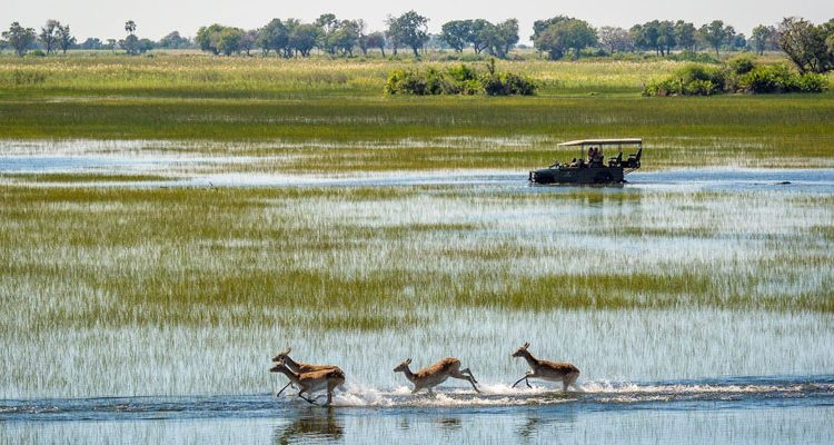 Jao Game Drive with antelope, Okavango Delta, Botswana