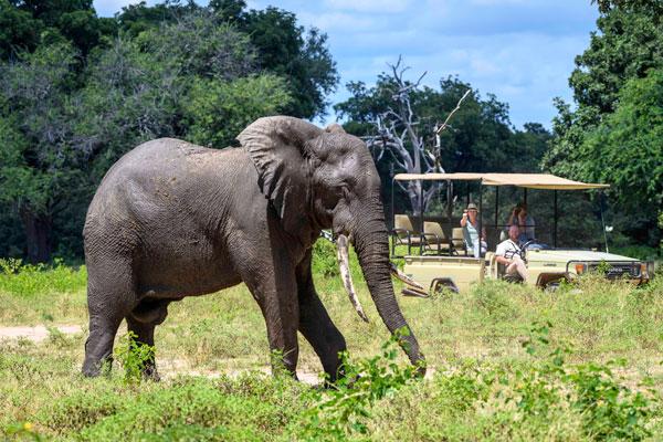 John's Camp game drives, Mana Pools, Zimbabwe
