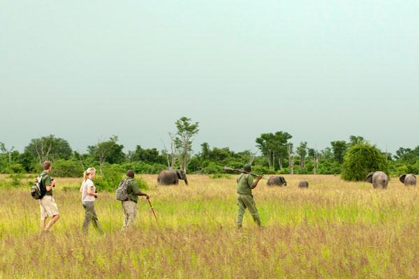 Norman Carr walking safaris, Zambia