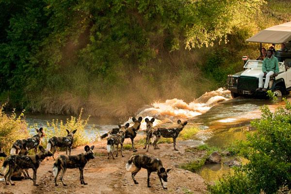 Morukuru Family game drives, Madikwe, South Africa