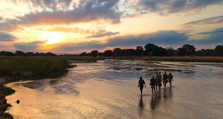 Walking Safaris - guide and group walking in the river South Luangwa, Robin Pope Safaris
