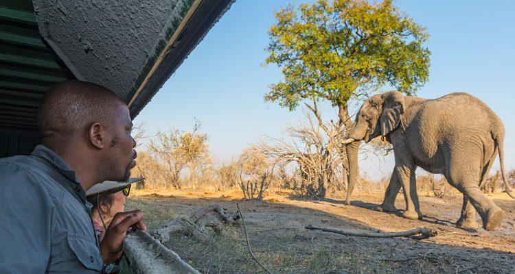 Hides - Kings Pool ground level hide with elephant, Botswana