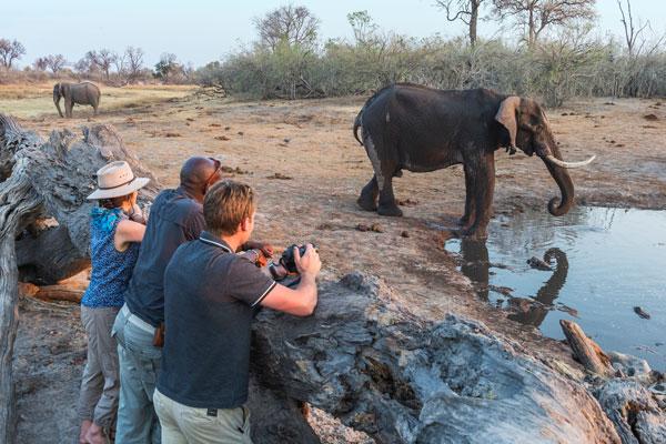 Savuti log pile hide, Botswana, Wilderness Safaris