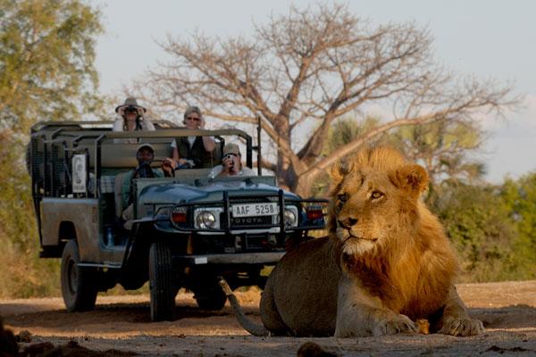 Chiawa Camp game drives, Lower Zambezi, Zambia