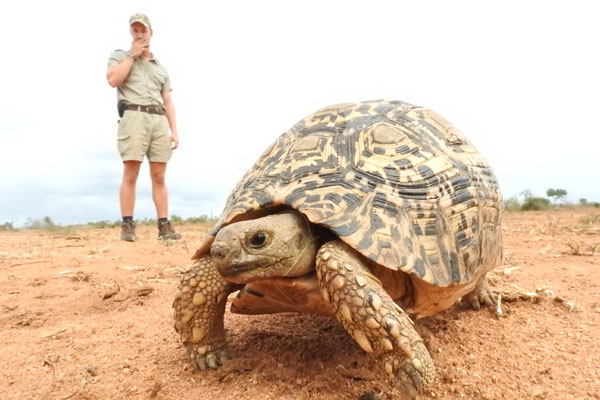 Tortoise and guide