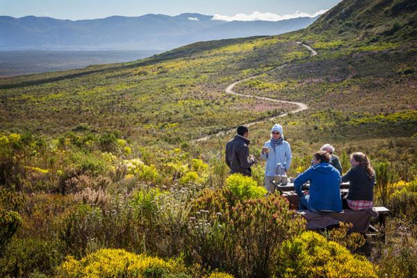 Picnic amid the fynbos, Grootbos