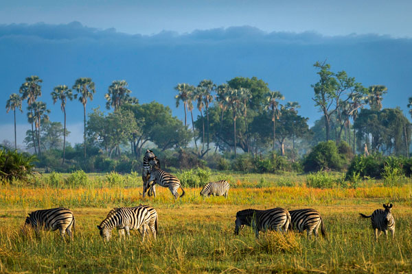 Okavango Delta scenery close to Mombo Camp