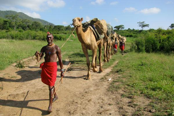 Camel assisted walking safaris, Karisia Safairs, Laikipia, Kenya