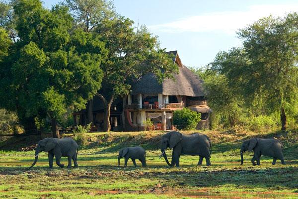 Elephants at Luangwa Safari House, South Luangwa Valley, Zambia