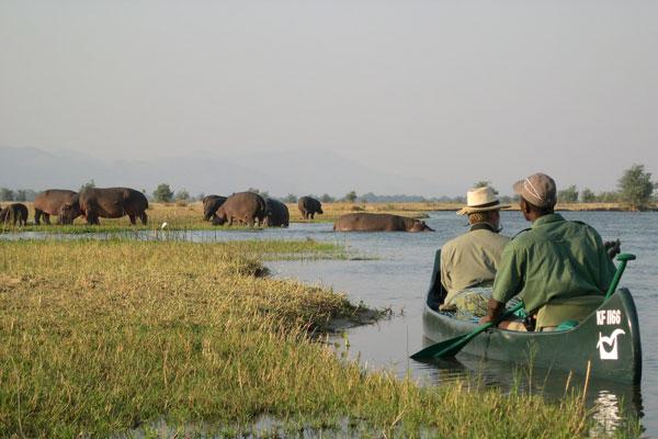 Canoe safari on the Zambezi River, Mana Shoreline Canoe