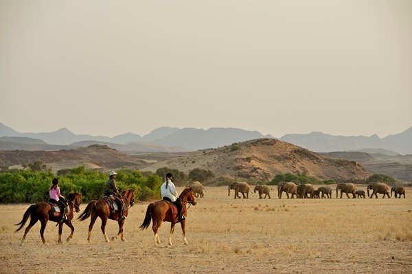Elephants in Damaraland, Namibia Horse Safaris