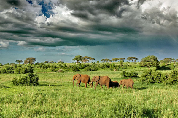 Dramatic skies and elephant in Tarangire
