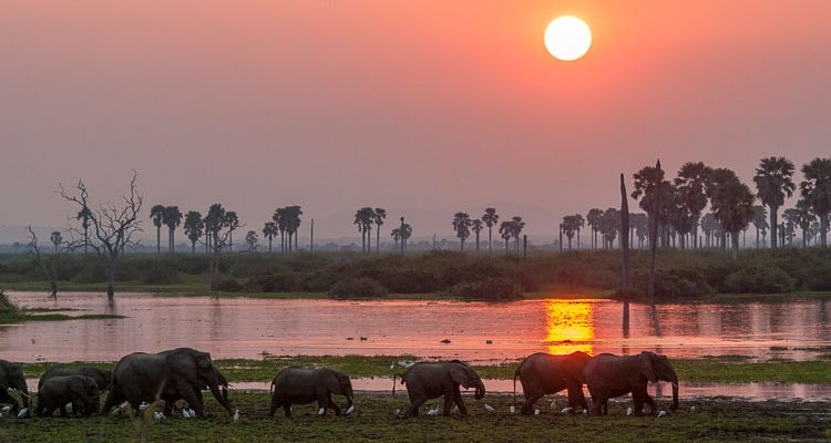 Selous river sunset with a herd of elephants wading, Tanzania's secret south