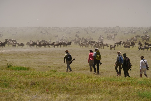 Walking with the annual wildebeest migration, Serengeti National Park
