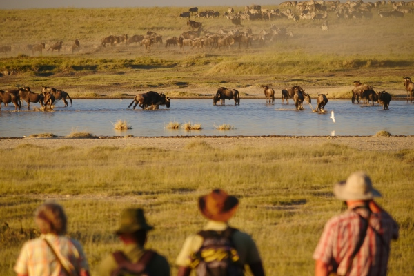 Watching the annual wildebeest migration at a crossing, Serengeti National Park