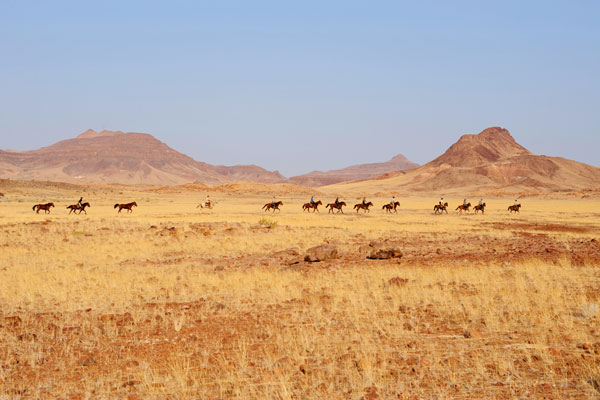Damaraland Elephant Ride with Namibia Horse Safaris, wildlife enthusiast safaris