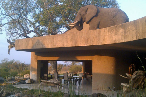 Elephant on the roof SabiSabi Reserve, South Africa