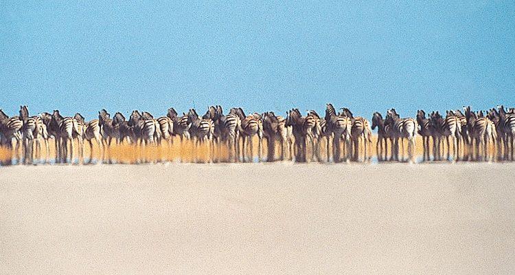 safari experts