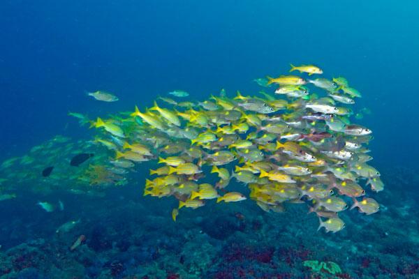 Snorkelling at Kinasi, Mafia Island