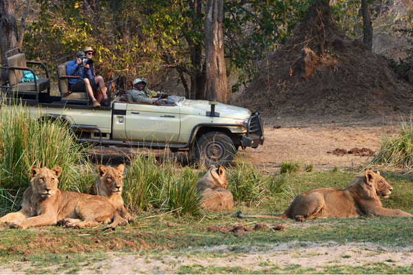 safari experts on private vehicles; Private vehicle at Sausage Tree Camp, Zambia