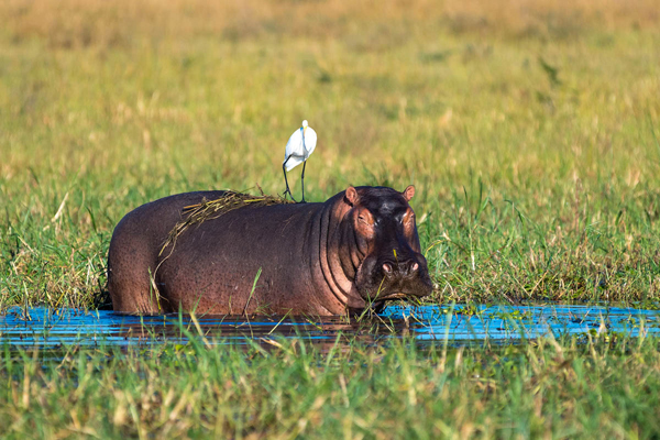 Kuthengo Camp, hippo and stork new safari camp openings