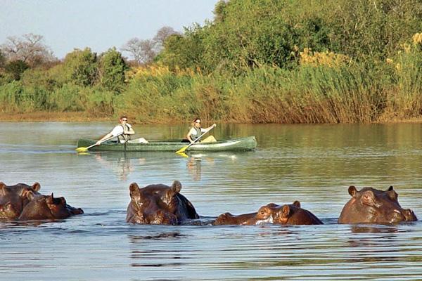 Canoeing with hippos on the River Zambezi, Sindabezi Island