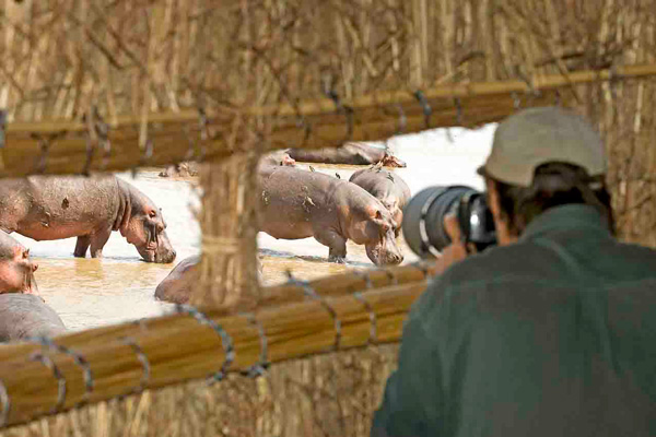 Photograph and watch hippos in the hide at Kaingo family safari experiences