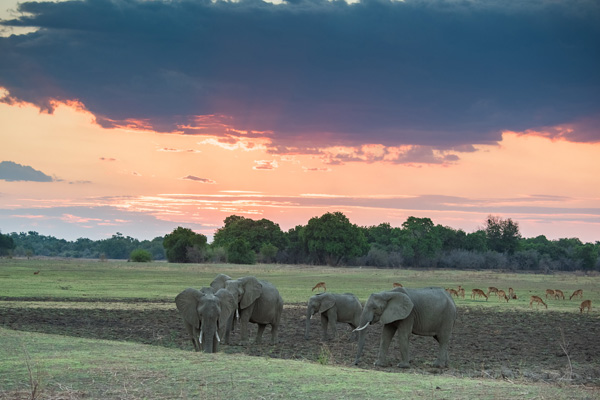 Sunset in the South Luangwa, Zambia, David Rogers