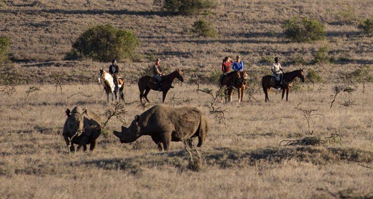 Riding with rhino