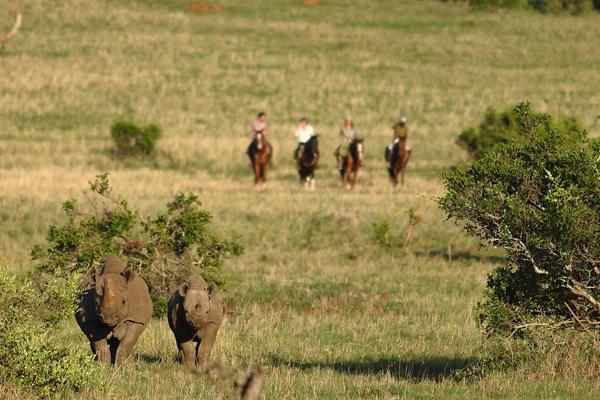 Riding at Borana with black rhinos Rhino riding safari