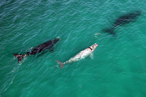 Whales off the coast, De Hoop nature reserve. LekkerWater South African Safaris