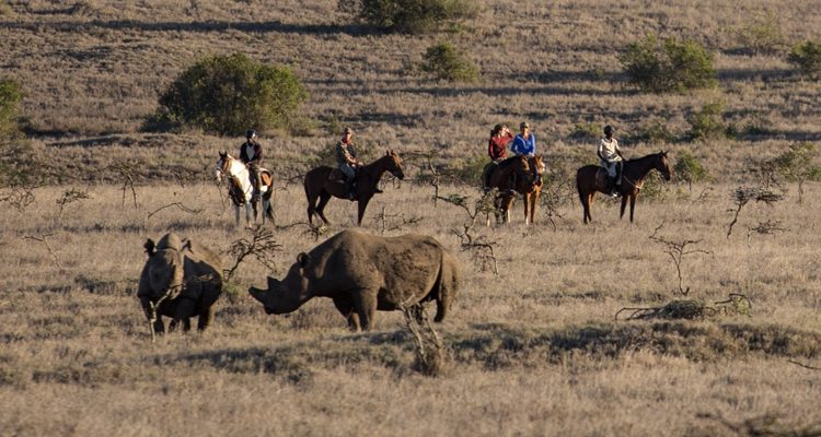 riding safari news