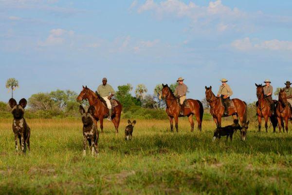 Riding with wild dog in the Okavango Delta, African Horseback Safaris