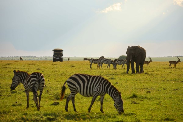 Classic Masai Mara scene on a game drive from Elephant Pepper Camp
