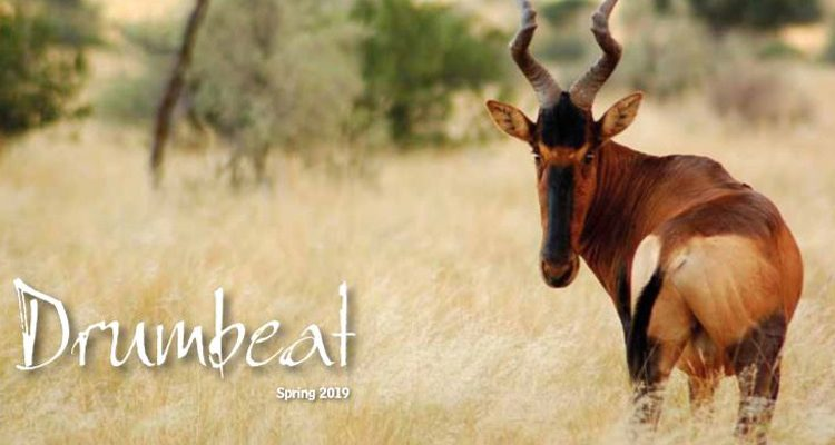 Drumbeat Spring 2019  frontcover