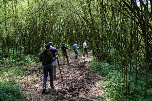 Gorilla tracking from Bisate Lodge, Volcanoes National Park, Rwanda