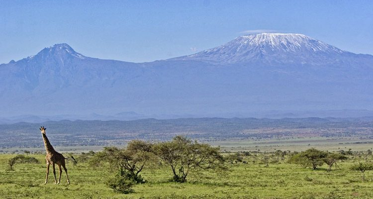 active climbing - giraffe and Mount Kilimanjaro in the distance