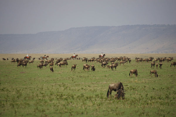 Riding with the wildebeest at Safaris Unlimited in the Masai Mara