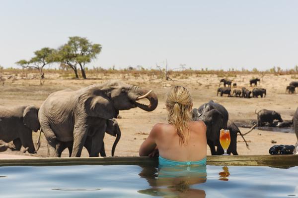 Somalisa Camp, elephants by the pool, Hwange, Zimbabwe